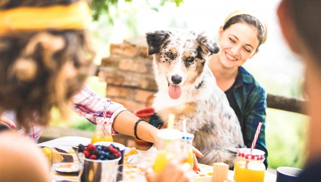 ristoranti cani ammessi Firenze - La Certosa