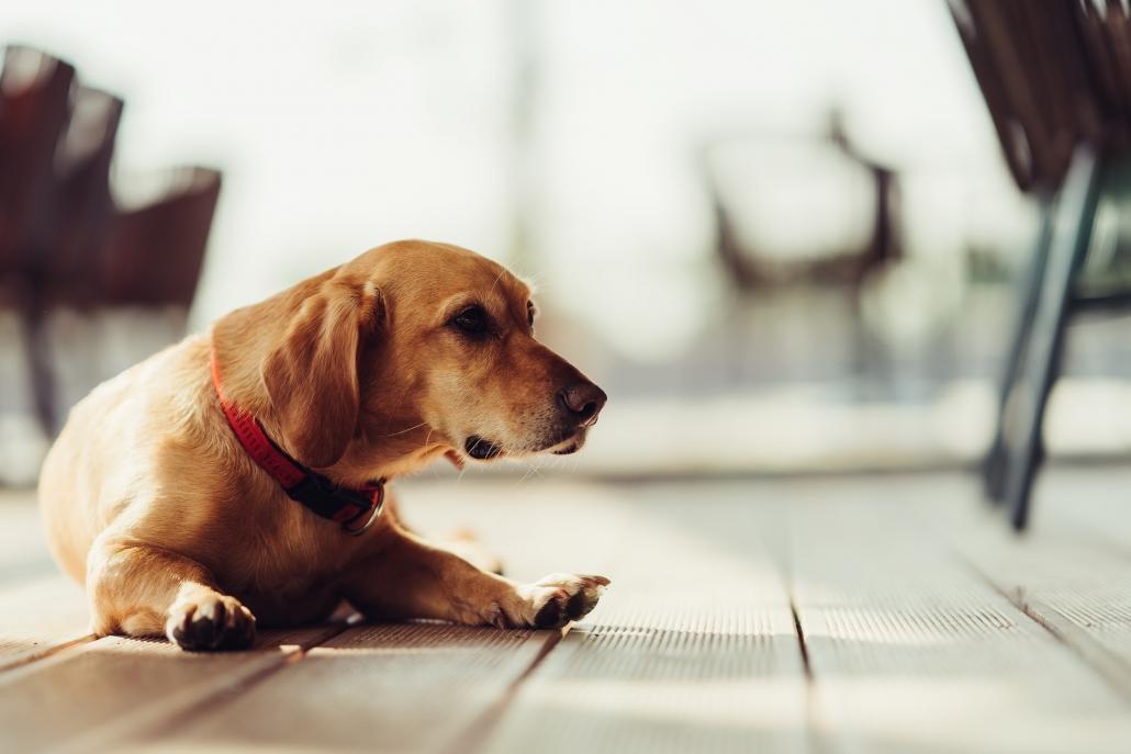 La Certosa: ristorante con cani ammessi a Firenze